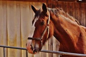 Horse - Lingehoeve Diergeneeskunde
