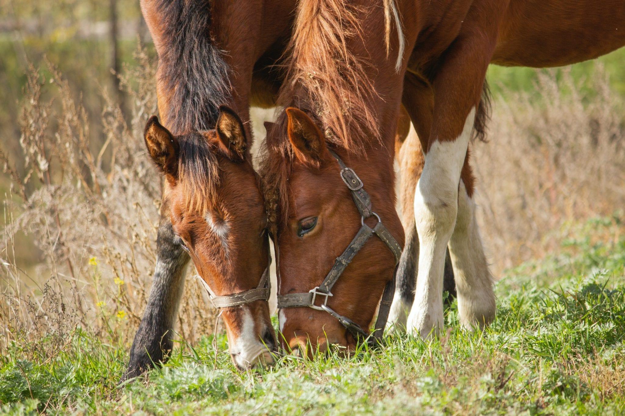 Voeding paard - Lingehoeve Diergneeskunde